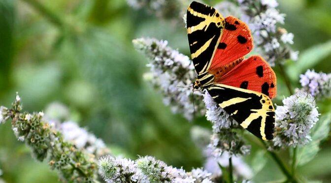 Namur veut marier les propriétaires de terrains et les jardiniers en herbe
